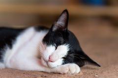 Vit och svart katt som sover på jordningen Royaltyfri Foto