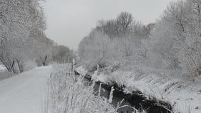 Vit och svart vinter p royaltyfri fotografi