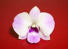 Vit och violett orkidé Arkivfoto
