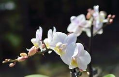 Vit orkidé ett soligt summerday Arkivfoto