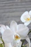 Vit orkidé och betong 12 Arkivfoton