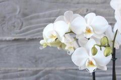 Vit orkidé och betong 11 Fotografering för Bildbyråer
