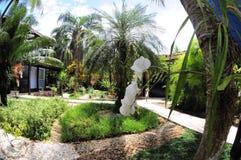 Vit orkidé på en trädgård Royaltyfri Fotografi