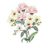 Vit orkidé, rosa färgrosblomma på en filial, vattenfärg, bukett Royaltyfri Foto