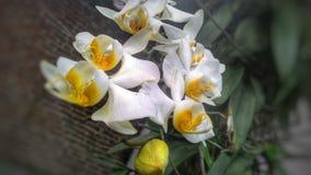 Vit orkidéblomblomma 12 Arkivbild
