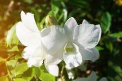 Vit orkidéblomma i naturträdgård arkivbilder
