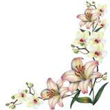 Vit orkidéblomma på en filial, lilja, vattenfärg, bukett, hörn Arkivbilder