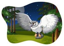 Vit owl Arkivfoto