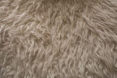 Vit pälsfodrar texturerar Övre sikt för slut av abstrakt pälsbakgrund Naturlig vit pälsbakgrund Royaltyfria Bilder