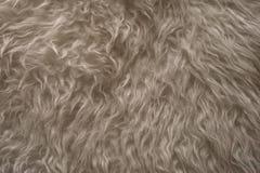 Vit pälsfodrar texturerar Övre sikt för slut av abstrakt pälsbakgrund Naturlig vit pälsbakgrund Arkivfoto