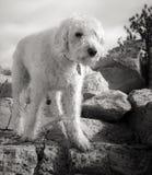 Vit på granit Fotografering för Bildbyråer
