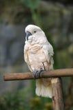 Vit papegoja arkivbild