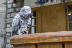 Vit papegoja framme av ett hotell Fotografering för Bildbyråer