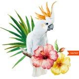 Vit papegoja, hibiskus som är tropisk, palmträd, blommor, modell, tapet Royaltyfri Bild