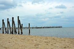 Vit pir vid Östersjön Arkivfoto