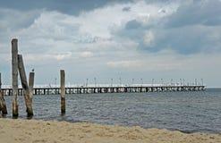 Vit pir vid Östersjön royaltyfri fotografi