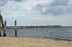Vit pir vid Östersjön Arkivfoton