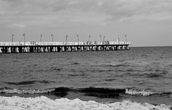 Vit pir vid den svartvita Östersjön arkivbild