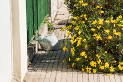 Vit plastpåse som kastas på en trottoar bredvid en storartad gul blommabuske arkivfoto