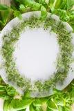 Vit platta med en ram av kryddkrassesallad och basilika på träbaksida arkivfoton