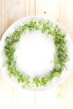 Vit platta med en ram av kryddkrassesallad på träbakgrund Till fotografering för bildbyråer