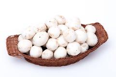 Vit plocka svamp i en korg som isoleras på vit fotografering för bildbyråer