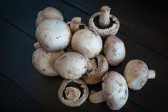 Vit plocka svamp på en mörk bakgrund Royaltyfri Foto