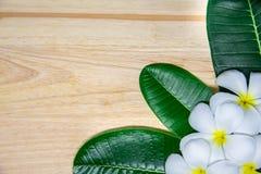 Vit plumeria blommar och tre gröna sidor Fotografering för Bildbyråer