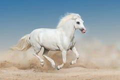 Vit ponnykörning royaltyfria foton