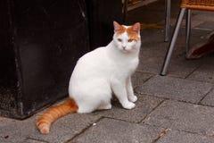 Vit-röd katt Arkivfoto
