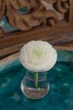 Vit ranunculusblomma i exponeringsglas på det keramiska magasinet Fotografering för Bildbyråer