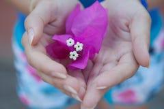Vit rosa färgblomma i kvinnors händer, närbild Royaltyfria Foton