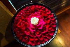 Vit roser med röda roskronblad i bunken i BalineseSPA sal arkivfoto