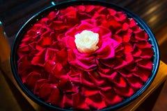 Vit roser med röda roskronblad i bunken i BalineseSPA sal fotografering för bildbyråer