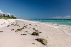 Vit sandstrand, korall och karibiskt hav för turkos carmendelmexico playa arkivfoto