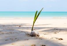 Vit sandstrand och kokosnöt arkivfoto