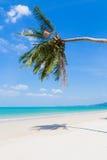 Vit sandstrand och palmträd arkivfoto