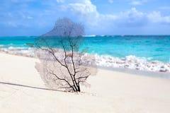 Vit sandstrand, turkoshav på blå himmel med vit molnbakgrund arkivbilder