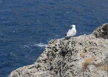 Vit seagull Royaltyfri Fotografi