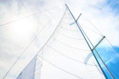 Vit seglar Arkivfoton