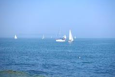 Vit seglar i oxehamn Arkivbild