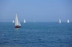 Vit seglar i oxehamn Royaltyfria Bilder