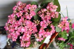 Vit signal för rosa blommor royaltyfri fotografi