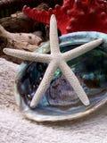 Vit sjöstjärna i det blåa snäckskalet som lägger på handduken Royaltyfri Foto