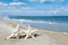 Vit sjöstjärna med havet, stranden, himmel och seascape Royaltyfri Bild