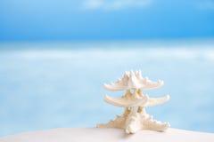 Vit sjöstjärna med havet, stranden, himmel och seascape Arkivfoto