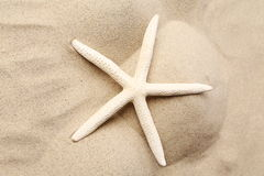Vit sjöstjärna på en sandbakgrund. Slut upp. Arkivfoto