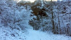 Vit skog Royaltyfri Foto