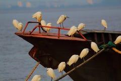 Vit skugga på floden fotografering för bildbyråer