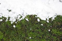 Vit snö ligger på ett ungt grönt gräs Royaltyfria Foton